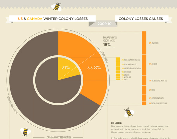 Honeybees infographic